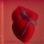 לב חי שהודפס במעבדת פרופ' טל דביר