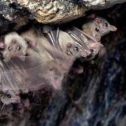 מושבת העטלפים בגן הזואולוגי (באדיבות בית הספר לזואלוגיה)