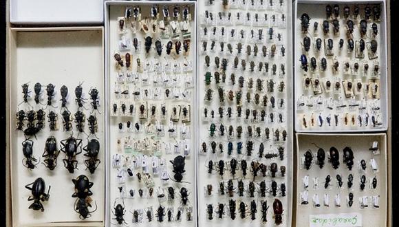 """אוסף פרוקי הרגליים במוזיאון הטבע ע""""ש שטיינהרדט (צלם: איתי בנית עבור המוזיאון)"""