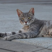 חתול רחוב בתל אביב