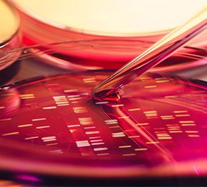 המסלול לביוטכנולוגיה