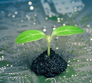 המסלול למדעי הצמח