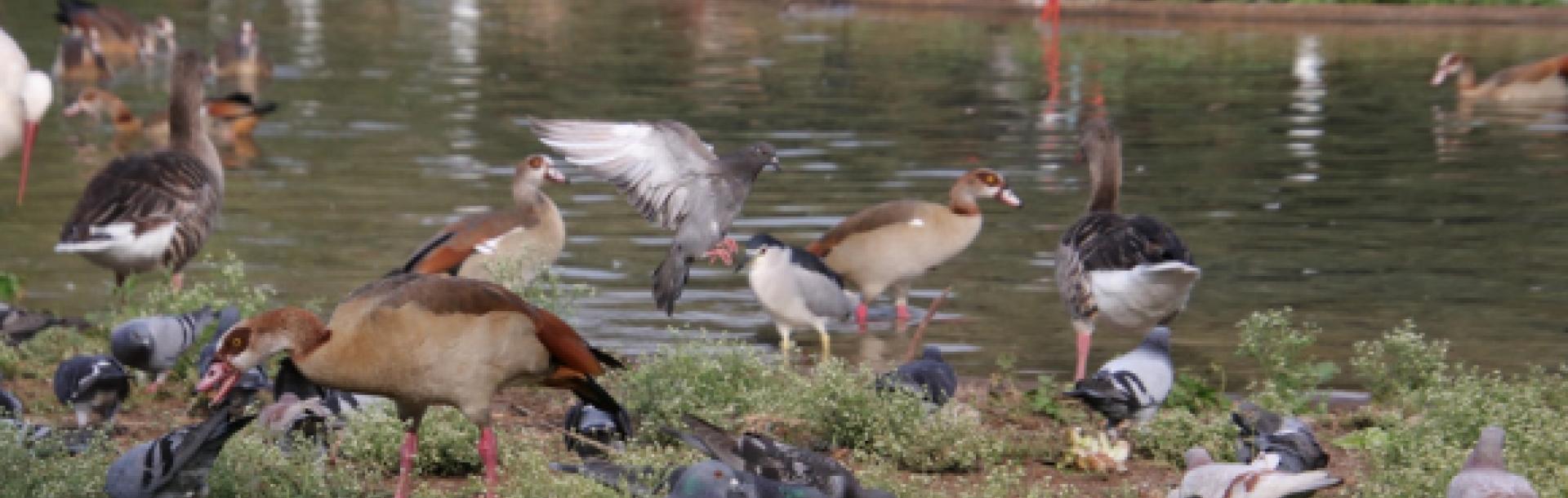 עופות בגן הזואולוגי