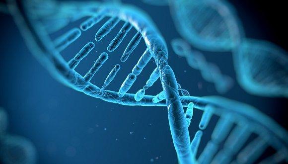 גנטיקה