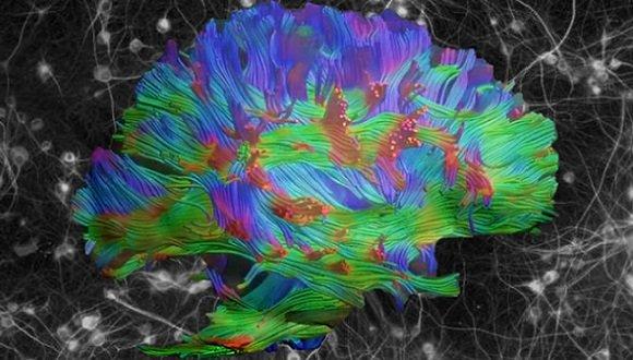 נוירוביולוגיה ומדעי המוח ההתנהגותיים