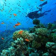 ביולוגיה ימית