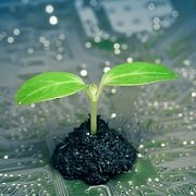 מדעי הצמח