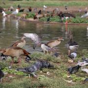 עופות מים בגן הזואולוגי