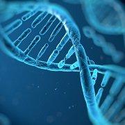 המסלול לגנטיקה (נלמד באנגלית)