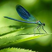 טכנולוגיה בהשראת הטבע (ביומימקרי)